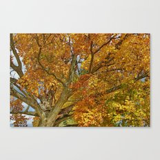 Canadian Tree 2012 Canvas Print