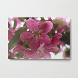 CrabApple Flowers Metal Print