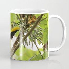 Swainson Toucan Coffee Mug