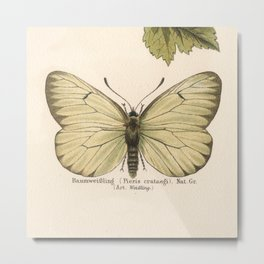 Antique Pale Green Butterfly Lithograph Metal Print