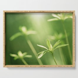 Green Nature Photography, Green Leaves Botanical Art Photo, Colorful Modern Print Serving Tray