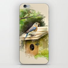 Watercolor Bluebird Art iPhone & iPod Skin