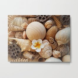 Sea shells ll Metal Print