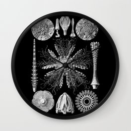Sand Dollars (Echinidea) by Ernst Haeckel Wall Clock