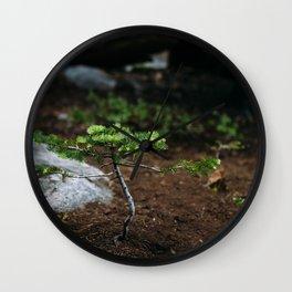New Growth // California Wall Clock