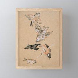 Study of Birds, Finches, 1897 Framed Mini Art Print
