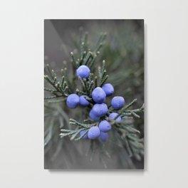 Macro Juniper Berries Metal Print