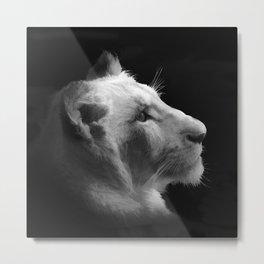 Wild White Lion Portrait Metal Print