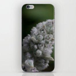 CAT GRASS iPhone Skin