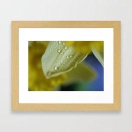 Jonquil after Spring Shower Framed Art Print