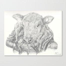 Little Calf Canvas Print