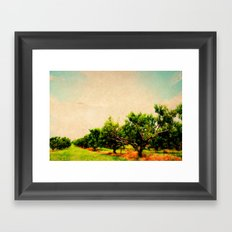 Vintage Orchard Framed Art Print