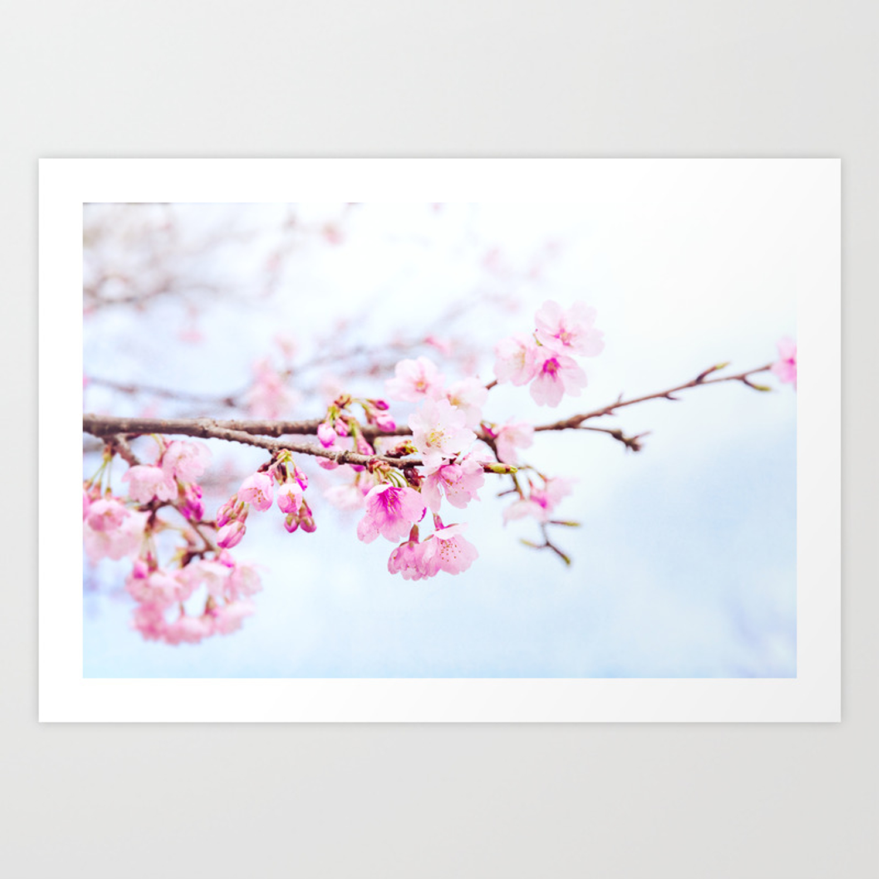 Japanese Cherry Blossom Tree Oh Kanzakura Art Print By
