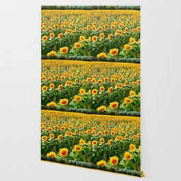 Field of Sunny Flowers Wallpaper