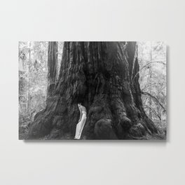 Peace in Nature Redwood Forest Metal Print