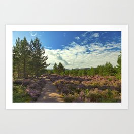 A pleasant path through blooming purple heather in Abernethy Forest. Art Print