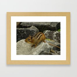 chipper chipmunk Framed Art Print