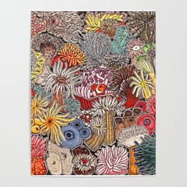 Clown fish and Sea anemones Poster
