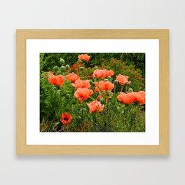 Poppies in a Summer Garden Framed Art Print