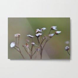 Grass Seeds Metal Print