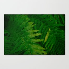 green ferns Canvas Print