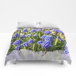 Grape hyacinths muscari Comforters