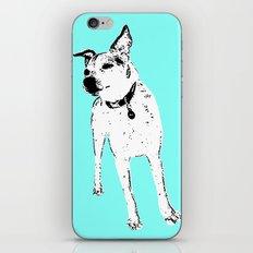 Jack Russell Terrior iPhone & iPod Skin