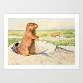 Fuertes, Louis Agassiz (1874-1927) - Burgess Animal Book for Children 1920 (Prairie Dog) Art Print