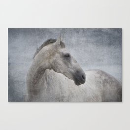 Grey at the Beach Canvas Print