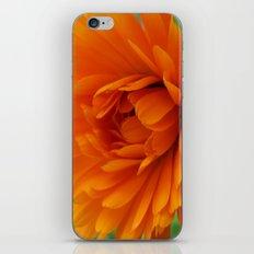 The little sun iPhone & iPod Skin