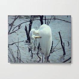 Great Egret in Water A108 Metal Print