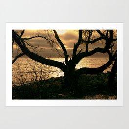 photogenic tree Art Print