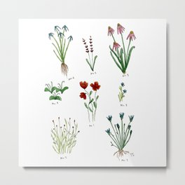 Wildflower Collection Metal Print