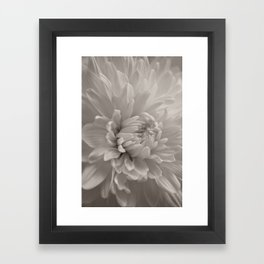 Monochrome chrysanthemum close-up Framed Art Print