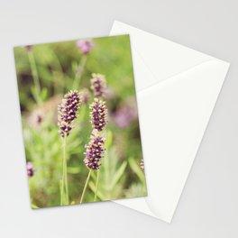 lavander Stationery Cards