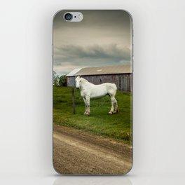 Big White Horse iPhone Skin