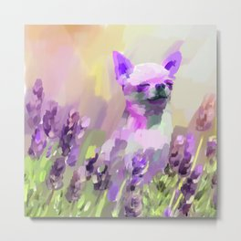 Chihuahua in Lavender Metal Print