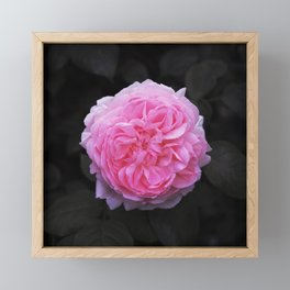 Flower (Beautiful) Framed Mini Art Print