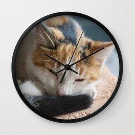 dozing tri-colored calico cat Wall Clock