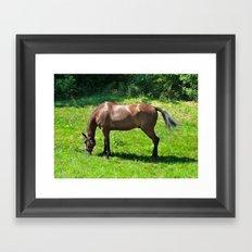 A Grazing Horse Framed Art Print