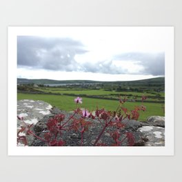 Wild Flower and Stone Wall Art Print