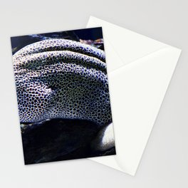 Honeycomb Moray Eel Stationery Cards