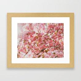 Beautiful Bundles Of Pink Cherry Blossoms In Full Bloom Japanese Sensibility Framed Art Print