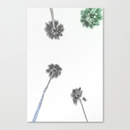 Palm Trees in Palm Springs Canvas Print