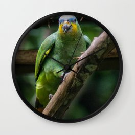 green parrot blue head Wall Clock