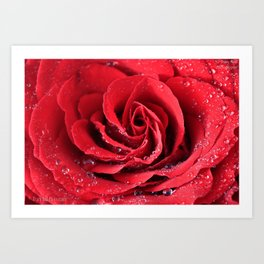 Red Swirl Rose Art Print