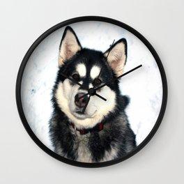 Kayla the Alaskan Malamute Wall Clock