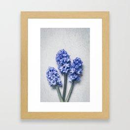 Three Blue Hyacinths Framed Art Print