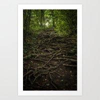 A Path of Roots Art Print