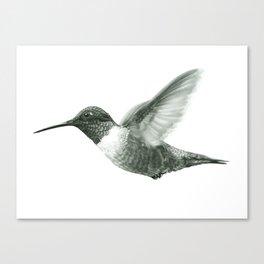 Ruby-Throated Hummingbird Drawing Canvas Print